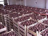 Микроклимат складов хранения картофеля