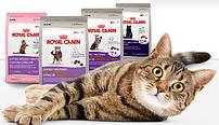 Royal Canin (Роял Канин) Консервы для кошек и котят