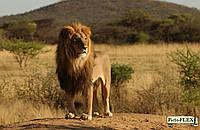 Животные 197205