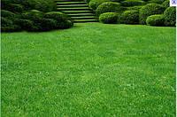 Трава газонная универсальная 20г