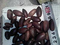 Жолудь дуба черешатого