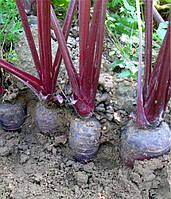 Морковь Purple