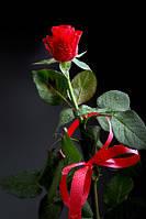 Метровая голландская роза