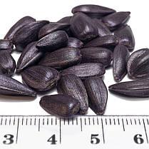 Семена Подсолнечника Гусляр От Производителя, фото 3