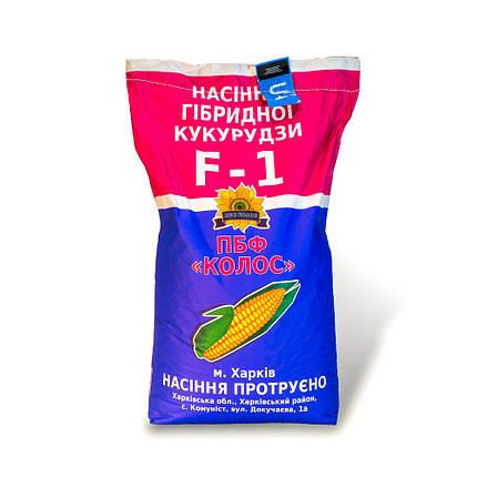 Насіння кукурудзи Оржиця 237 МВ від виробника, фото 2